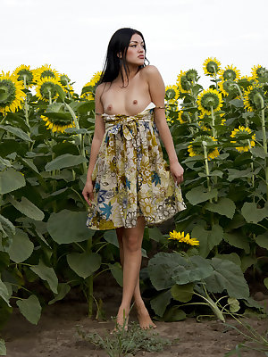 Teen brunette with exotic air strips her summer dress and poses naked among sunflowers.